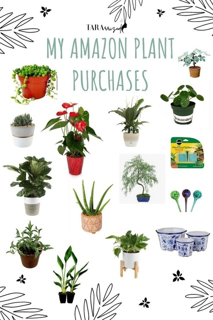 All my plants I've ordered from Amazon that are thriving! #plantlife #plantlady #ShopStyle