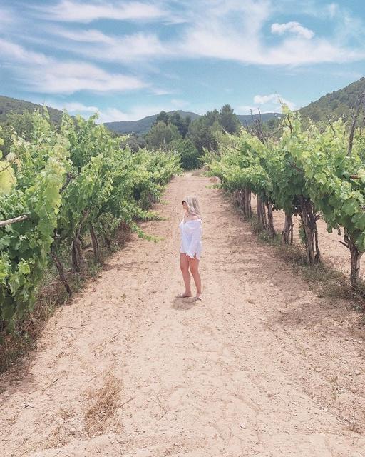 Vineyard Look 🍇🌿